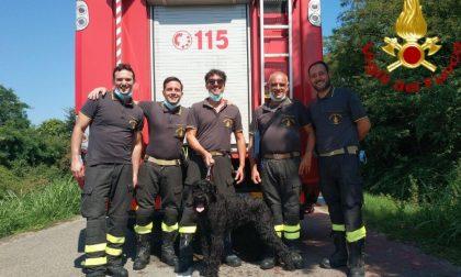 Cane in acqua salvato dai Vigili del Fuoco, angeli di umani e animali FOTO