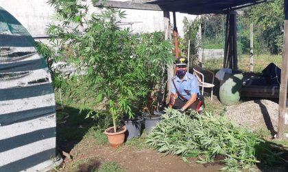 Insieme a pomodori e zucchine nell'orto coltivava anche cannabis: 22enne nei guai