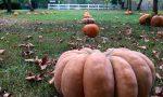 A San Martino Siccomario debutta il Pumpkin Patcht, il Villaggio delle Zucche FOTO