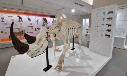 Riaperti i musei dell'Università di Pavia