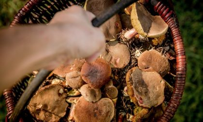 A cercare funghi sull'Appennino Modenese: coi rifiuti porta a casa una bomba