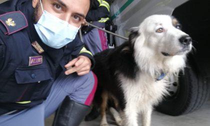 """Cane in fuga """"per amore"""" sull'autostrada: recuperato sano e salvo FOTO"""