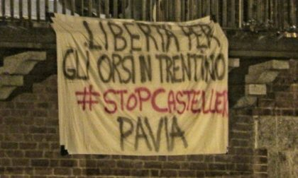 """""""Libertà per gli orsi del Trentino!"""": anche nel Pavese striscioni contro la detenzione di M49, M59 e DJ3"""
