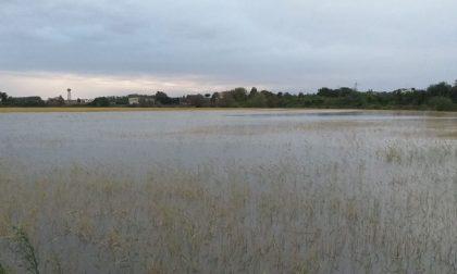 Esondazione Sesia, chiesto al Governo stato di calamità: danni per 13milioni ad aziende agricole