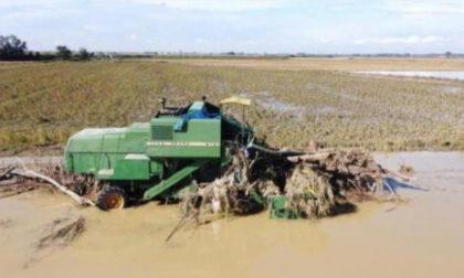 """Danni da maltempo, Cia Pavia: """"Occorre coinvolgere agricoltori in piani di manutenzione"""""""