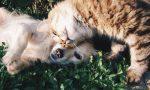 """Una """"Domenica Bestiale"""": la grande festa degli animali e di chi li ama"""