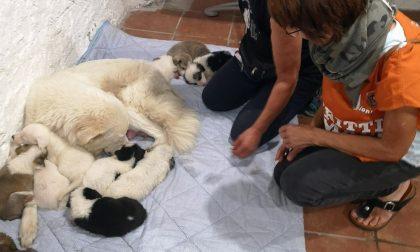 Liberati undici cuccioli e la loro mamma segregati in un'abitazione privata disabitata: cercano una nuova famiglia FOTO