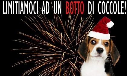 Notte di Capodanno, a Pavia vietati fuochi artificiali e petardi