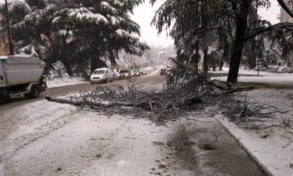 Forti nevicate nel Pavese, alberi caduti e disagi alla circolazione stradale