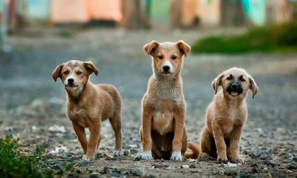 6 cani (5 morti) folgorati dalla corrente: scattano le denunce contro i Sindaci