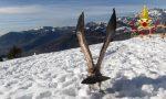 Torna a volare il grifone che aveva perso la rotta ed era finito in pianura FOTO