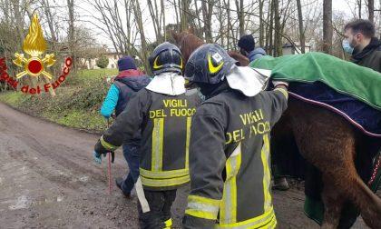 Cavalla cade in un canale adiacente al Ticino, salvata dai Vigili del Fuoco FOTO