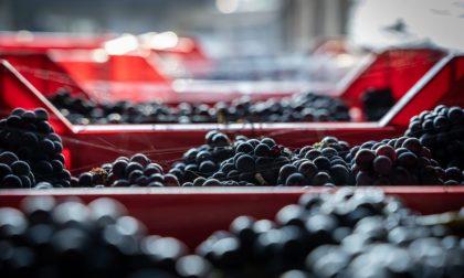 Gli scarti di lavorazione dell'uva diventano prodotti cosmetici