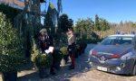 Sorpreso nel vivaio a rubare 12 piante da frutto: 52enne arrestato