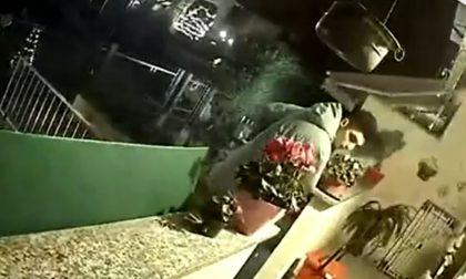 """Ladro in villetta filmato dalle telecamere: """"Lo riconoscete?"""""""