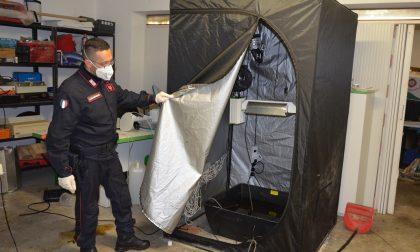 In auto un etto di marijuna, a casa una serra e un laboratorio artigianale: arrestato
