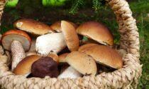 Va in cerca di funghi e trova due chili di hashish