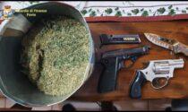 Vendevano droga e armi tra Zinasco e Pavia, 9 arresti: il video delle 4 piantagioni di marijuana sequestrate