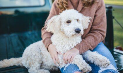 """""""Amici Fedeli"""", a Pavia un bonus per rimborsare le cure veterinarie"""
