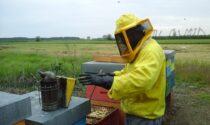 Clima pazzo e alveari in crisi anche a Pavia: apicoltori intervengono con razioni d'emergenza per salvarli