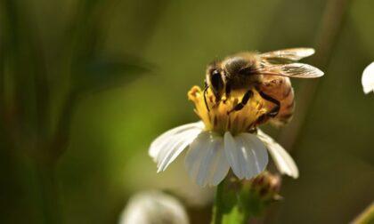 """All'Orto Botanico di Pavia due giorni di iniziative per la """"GiornataMondiale delleApi"""""""