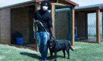A Pavia i cani entrano in carcere per aiutare i detenuti nel percorso riabilitativo