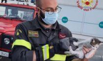 Micio rimane intrappolato nel vano motore di un'auto, salvato dai Vigili del Fuoco