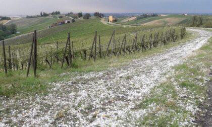 Violenta grandinata in Oltrepò, viti distrutte e danni fino all'80%