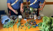 Nell'orto coltivavano pomodori, zucchine e.. marijuana