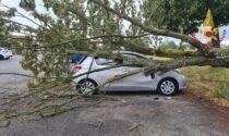 Maltempo nel Pavese: un albero si abbatte su un'auto parcheggiata