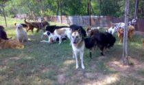 L'Oasi Shangai di Robbio lancia una raccolta fondi per sostenere le profilassi dei cani