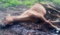 Rocca de' Giorgi: cavalli trovati in condizioni di abbandono e incuria