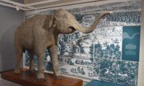 L'elefante che Napoleone donò all'Università di Pavia va in mostra a Versailles