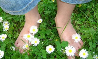 Vivere green a Pavia! La riqualificazione ambientale delle aree verdi