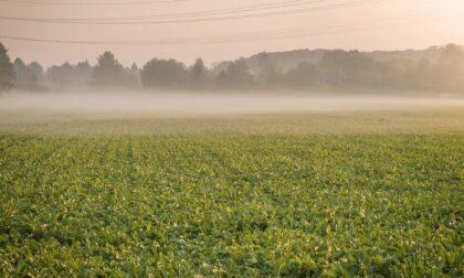 Soleggiato o poco nuvoloso ma arrivano foschia e nebbie   Meteo Lombardia
